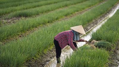 Huế phát triển nông nghiệp sạch tại các địa phương mới sáp nhập