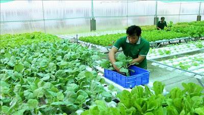 Các tỉnh hướng đến phát triển nông nghiệp hữu cơ